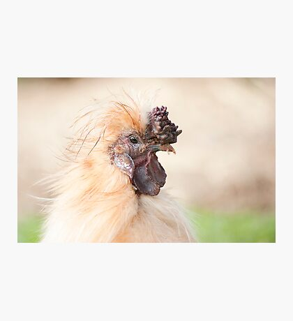 Bad Hair Day - silky rooster Photographic Print