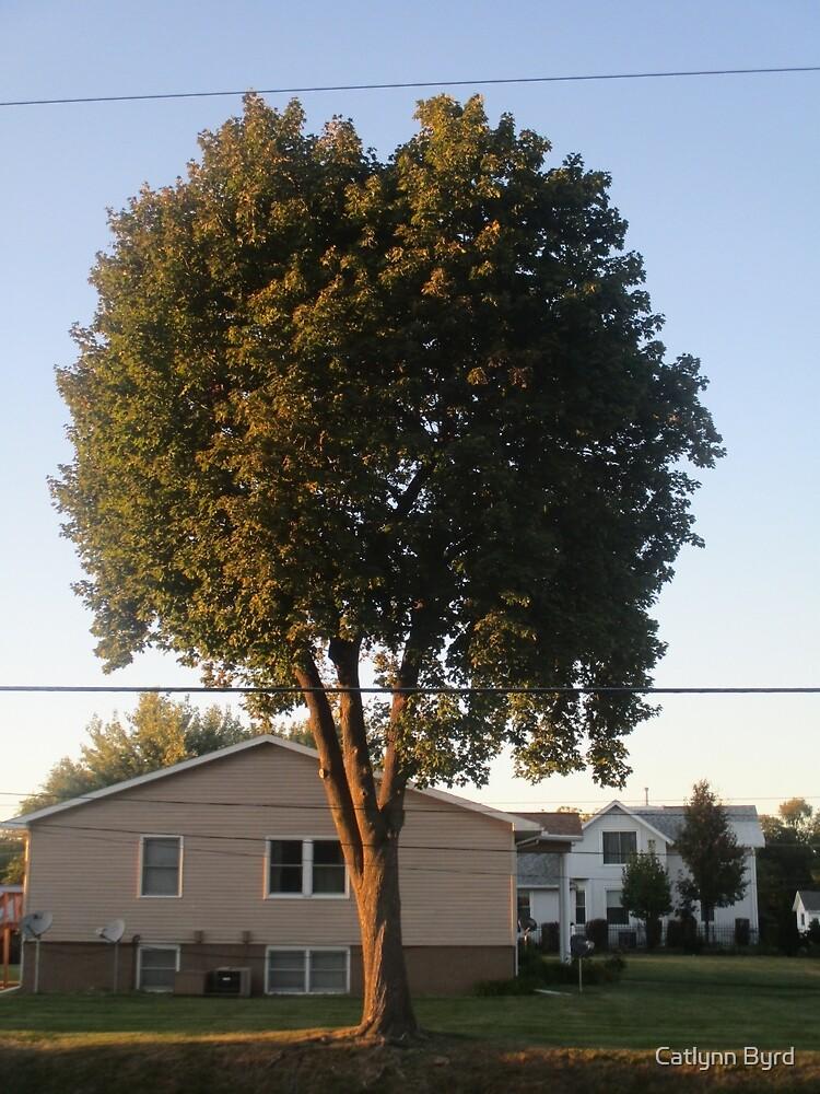 Setting Sun on Tree by Catlynn Byrd