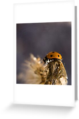 Ladybird 1 by Tamara Rogers