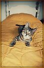 This Is My Bed? by jodi payne