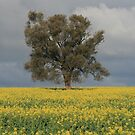 Tree in field by Allison Sheenan
