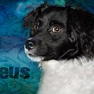 Zeus - aka a bundle of energy by Myillusions