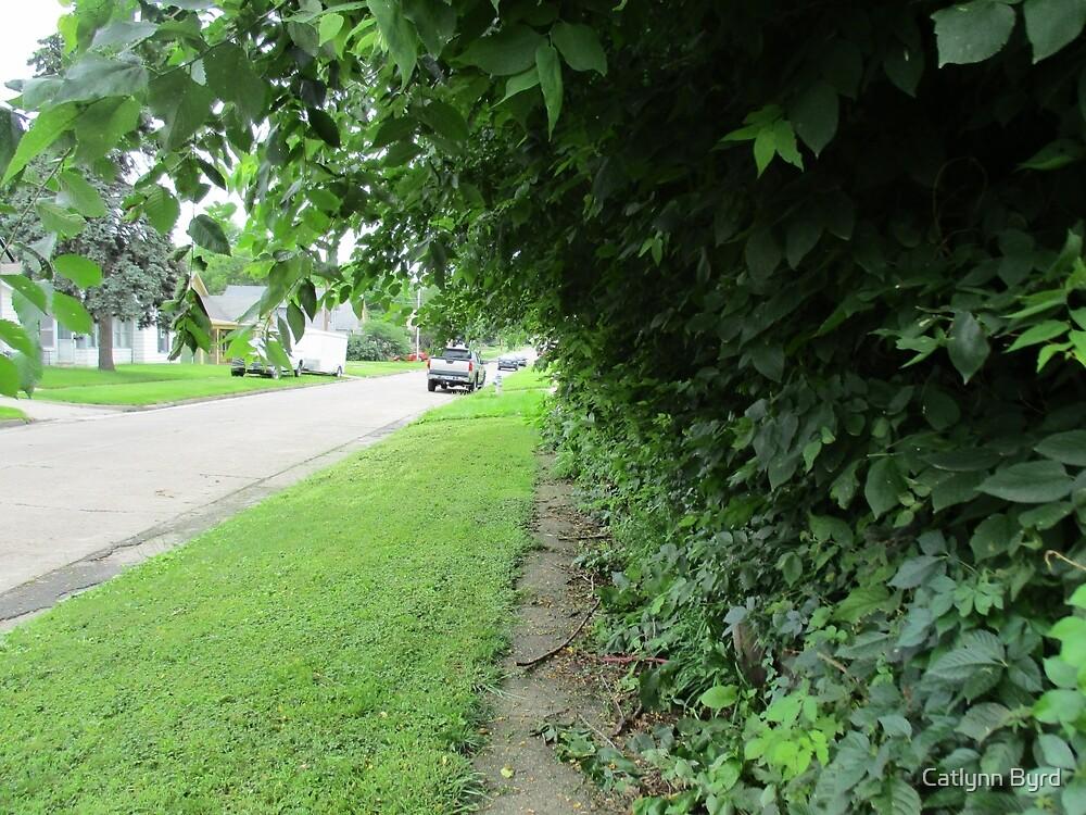 Overgrown Greenery by Catlynn Byrd