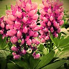 Summer Lupins by Rewards4life