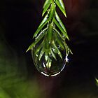 Rain Drop by RebeccaBlackman
