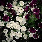 Petunias by Rewards4life