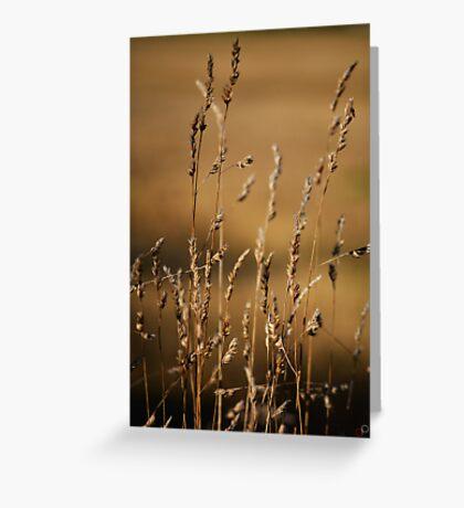 Golden Grasses Greeting Card