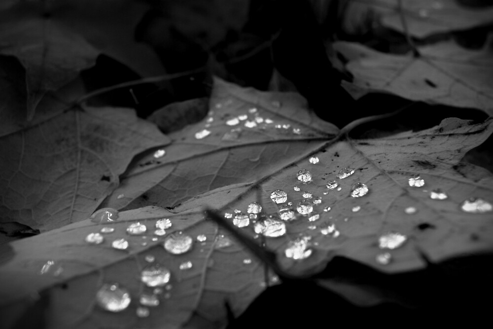 Drops (monochrome) by EFSPhotography