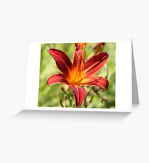 red lilly flower Greeting Card