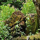 moss on log by LivvysLense