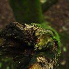 close to nature by LivvysLense