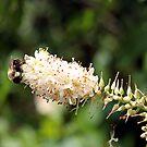 Bottle Bee by Judi FitzPatrick