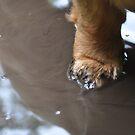 small paw, big puddle by LivvysLense