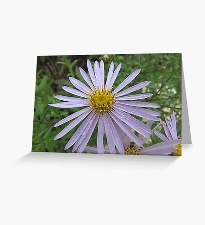 Sommer in the Garden Greeting Card
