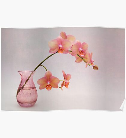 Orchids in a Pink Vase Poster