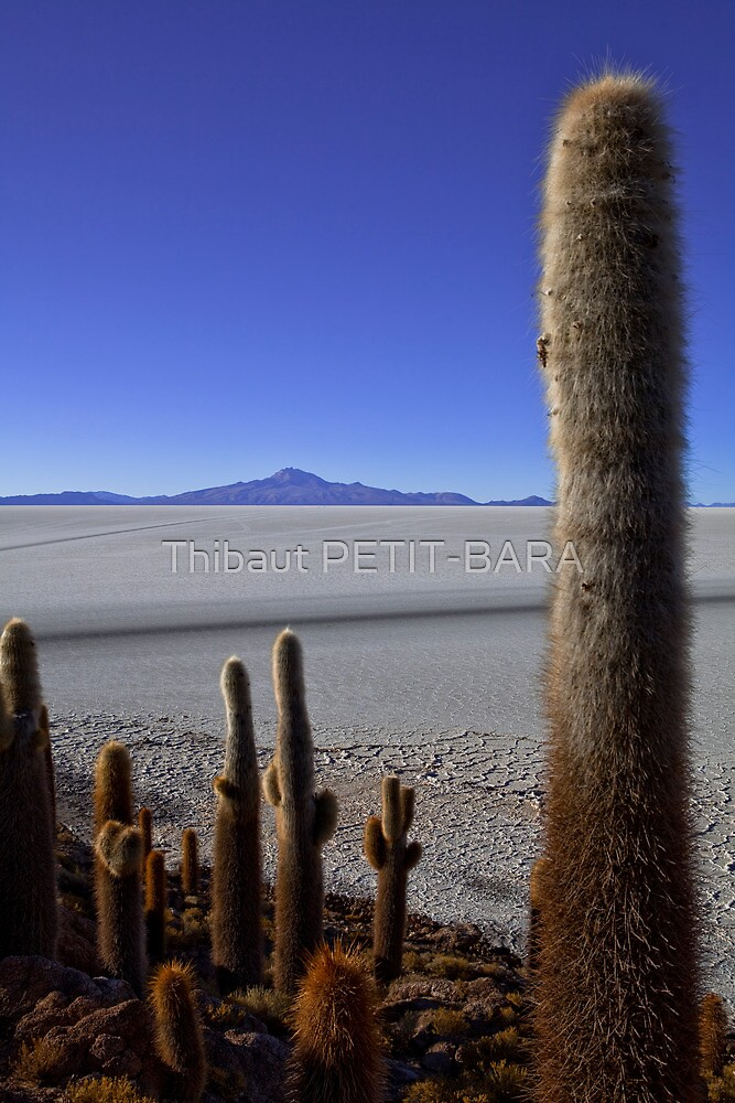 View from Isla de los Pescados, Inca Wasi, oasis and catus, Uyuni, Salar, Sud Lipez, Chile border, Bolivia, South america by Thibaut PETIT-BARA