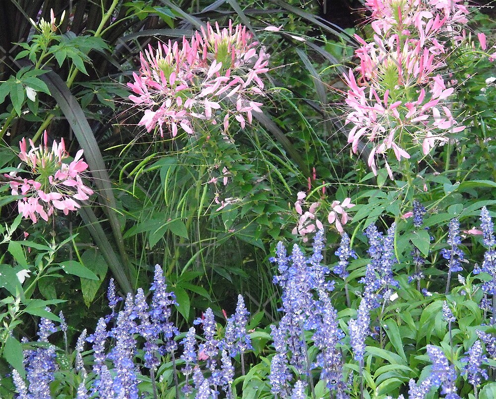 Flowers by Shulie1