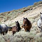 Wild Blue Roan Stallion - Family Portrait by A.M. Ruttle