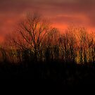 Evening in the Country by Brian Gaynor