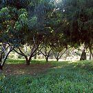 Summer Stroll by InKibus