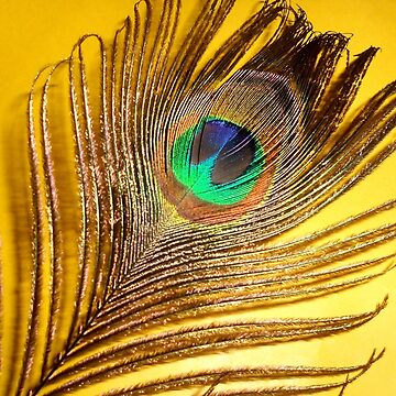 Peacock feather by VeenaNair23