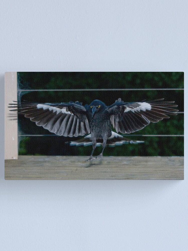 Alternate view of Currawong Canvas Print