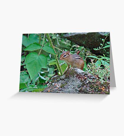 Eastern Chipmunk - Tamias striatus Greeting Card