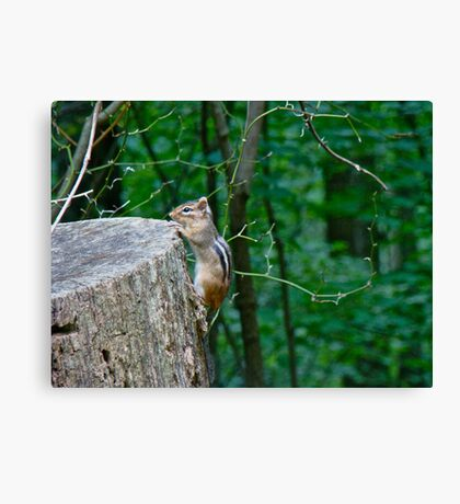 Peek-A-Boo Canvas Print