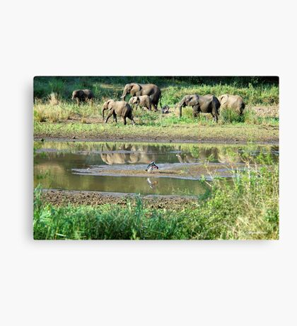 WILDERNESS MAGICAL MOMENTS - The Kruger National Park  Canvas Print