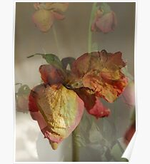 Dried Roses Collage Poster