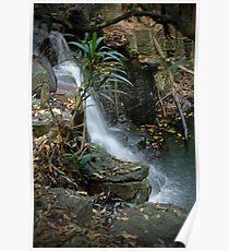 Mapleton  Falls waterfall  Poster