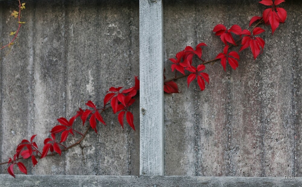 Red fall flowers by niar