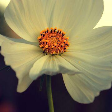 Bloom by mittenphoto