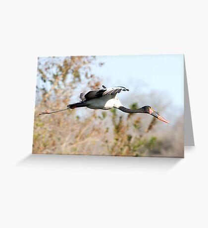 Saddle-billed Stork Greeting Card