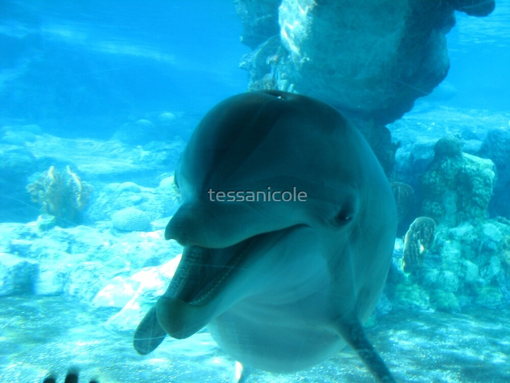 Bottlenose Dolphin by tessanicole