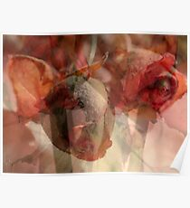 Dried Roses with Wonder Poster