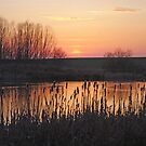 On Golden Pond by TomRaven