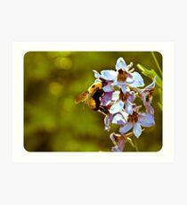 Nectar Art Print
