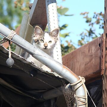 Another Junk Yard Cat  by TigerBomb