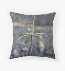 Primerose Spider Orchid (Caladenia xantha)  Throw Pillow