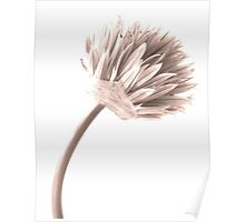Sepia Chive Poster