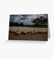 Merino Sheep Greeting Card