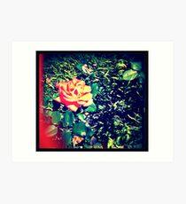 secondhand rose Art Print