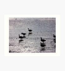 Birds Deciding Trip South ! Art Print