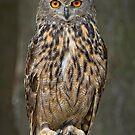 Eagle Owl  by Daniel  Parent