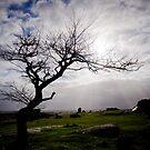 Winter Tree by Caroline Gorka