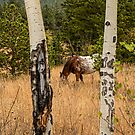 Beautiful Horse Through The Aspen Trees Portrait by Bo Insogna