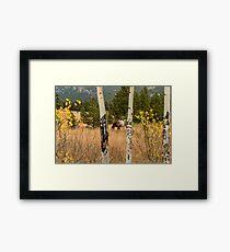Beautiful Horse Through The Aspen Trees Trunks Framed Print