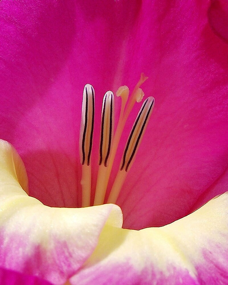 In The Pink by Kathilee