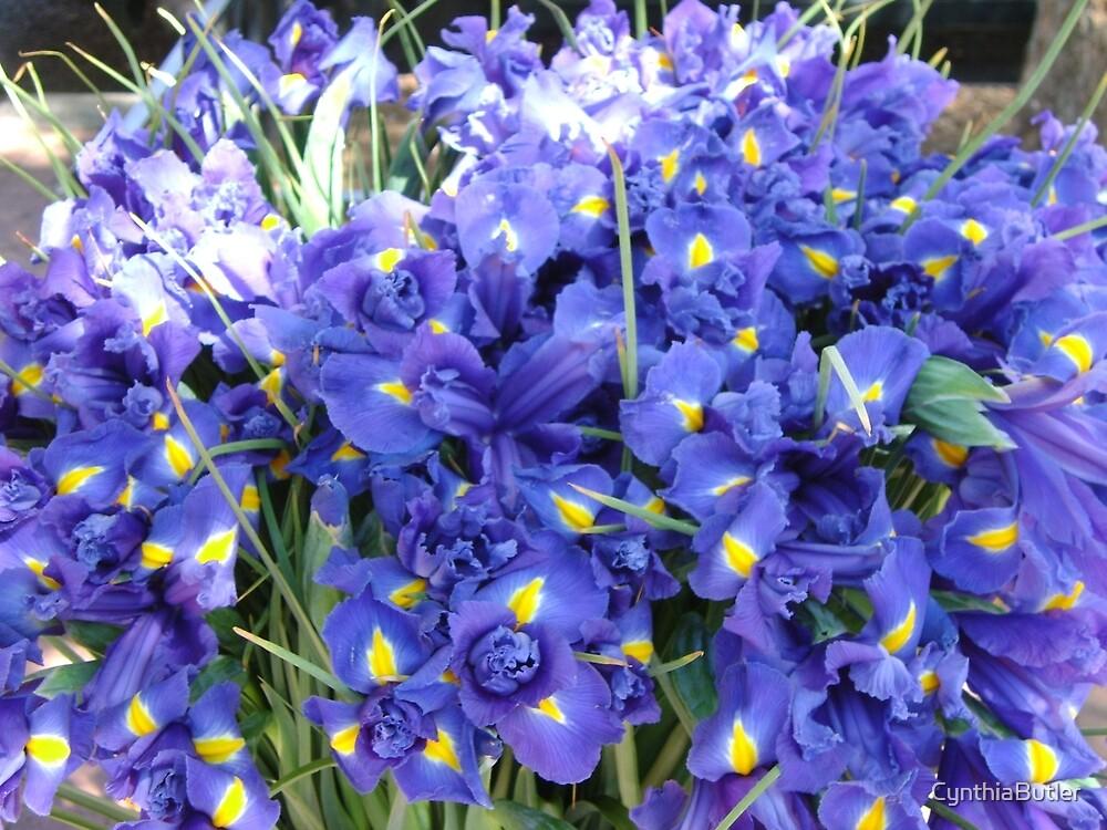 Purple Daffs by CynthiaButler